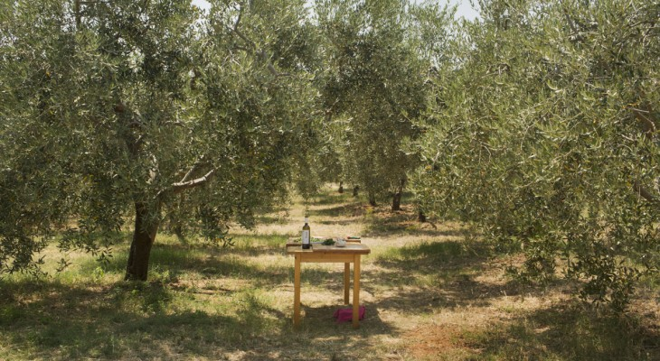 EatIstria olive grove