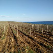 South Istria wine tour